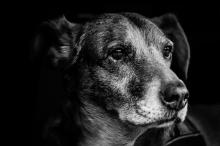 knöl under huden hos hund