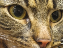 kortison till katt