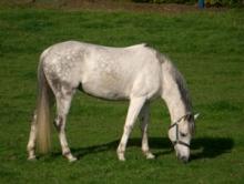 fång häst behandling